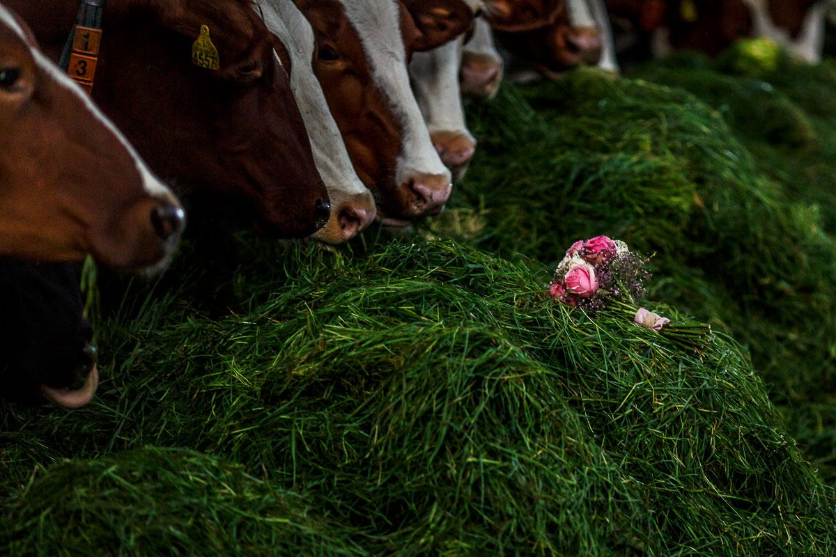 trouwen-op-een-boerderij-hattem-018jacob-daphne