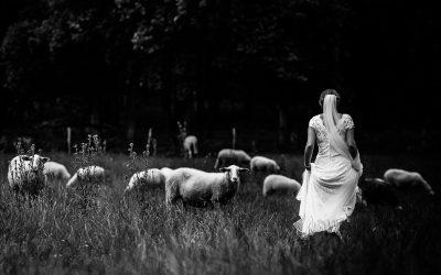 Preview Bruidsfotograaf Brummen Bronckhorst Hoeve | Matthijs & Kim